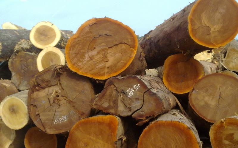 Свежесрубленные ценные породы древесины