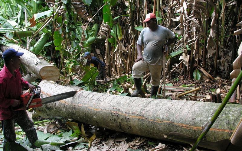 Обработка древесины Бальзы
