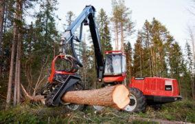 Раскряжевка древесины